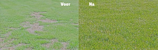 doorzaaien gras